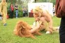 Tierheimfest-157